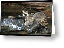 Adult Raccoon Hunting Greeting Card
