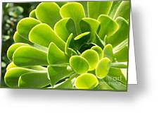 Aeonium Canariense Greeting Card