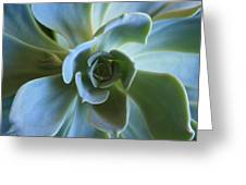 Aeonium Greeting Card