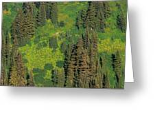 Aerial View Of Forest On Mountainside Greeting Card