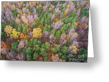 Aerial View Of The Forrest With Different Color Trees.  Greeting Card