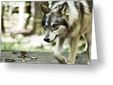 Aero Wolf 1 Greeting Card