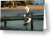 Aeronautical Acrobatics Greeting Card