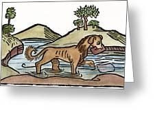 Aesop: Dog & Shadow, 1484 Greeting Card