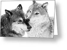 Affection Of Wolves Greeting Card