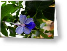 Africa Butterfly Bush Flower Greeting Card