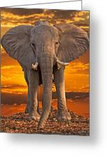 African Bull Elephant At Sunset Greeting Card