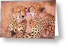 African Cheetah's  Greeting Card