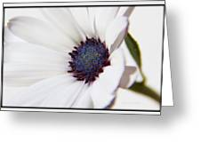 African Daisy  Sky And Ice Greeting Card