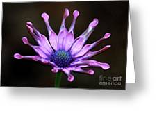 African Daisy Portrait Greeting Card