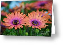 African Daisy Twins Greeting Card