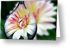African Daisy Vase Greeting Card