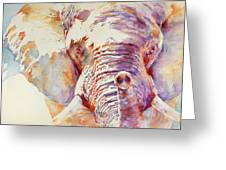 African Elephant _ The Governor Greeting Card