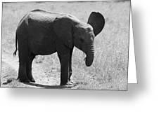 African Elephant Calf Greeting Card