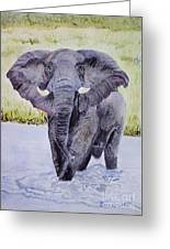 African Elephant Crossing The Chobe River Greeting Card