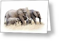 African Elephant Group Isolated Greeting Card