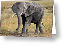African Elephant Happy And Free Greeting Card