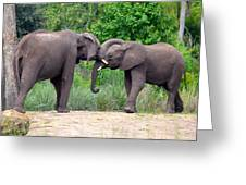 African Elephants Interacting Greeting Card