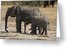 African Elephants Mother And Baby Greeting Card