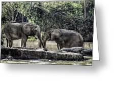 African Elephants_hdr Greeting Card