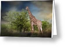 African Giraffe Greeting Card