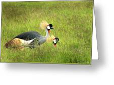 African Gray Crown Crane Greeting Card
