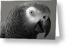 African Gray Greeting Card