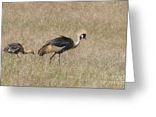 African Grey Crown Crane Greeting Card
