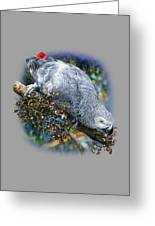 African Grey Parrot A1 Greeting Card
