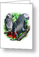 African Grey Parrots A Greeting Card
