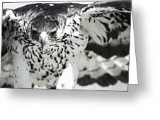African Hawk Eagle 2 Greeting Card