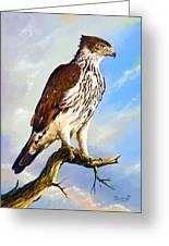 African Hawk Eagle Greeting Card
