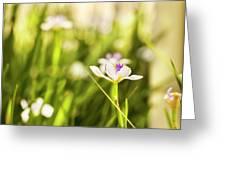 African Iris Bokeh Greeting Card
