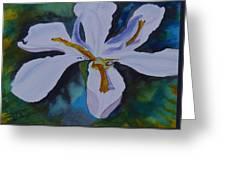African Iris Greeting Card
