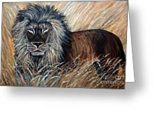 African Lion 2 Greeting Card