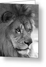 African Lion #8 Black And White Greeting Card