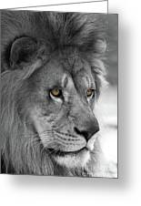 African Lion #8 Black And White  T O C Greeting Card