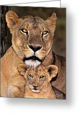 African Lions Parenthood Wildlife Rescue Greeting Card