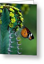 African Monarch On Cactus Greeting Card