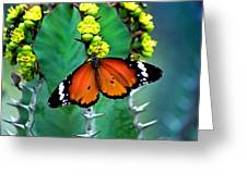 African Monarch Greeting Card