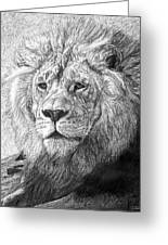 African Nobility - Lion Greeting Card