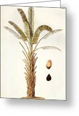 African Oil Palm Greeting Card