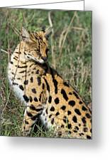 African Serval In Ngorongoro Conservation Area Greeting Card