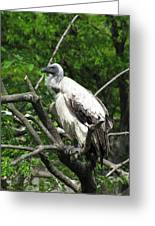 African Vulture Greeting Card