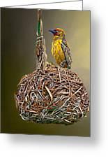 Weaver Nest Greeting Card