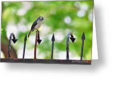 African White-eye Bird Greeting Card