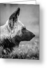 African Wild Dog Greeting Card