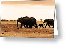 African Wild Elephants Greeting Card