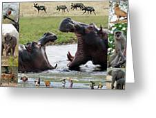 African Wildlife Montage - Hippos Greeting Card