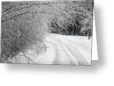 After An Ice Storm Greeting Card